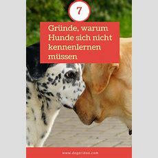 Hundebegegnungen 7 Gründe, Warum Hund Sich Nicht Kennenlernen Müssen  Hundewissen Pinterest