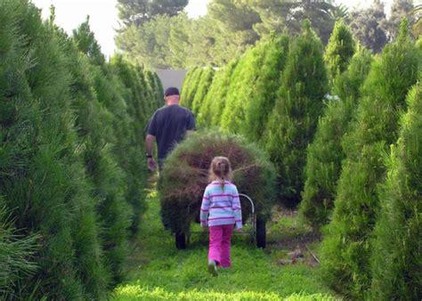 best nc christmas tree farm cut your own tree farms in san diego