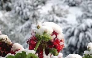 Wann Pfingstrosen Schneiden : plantura das hobbyg rtner gartenmagazin ~ Frokenaadalensverden.com Haus und Dekorationen