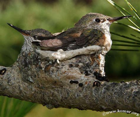 hummingbird nest baby hummingbird nest advgrrl motorcycle adventures by leslie