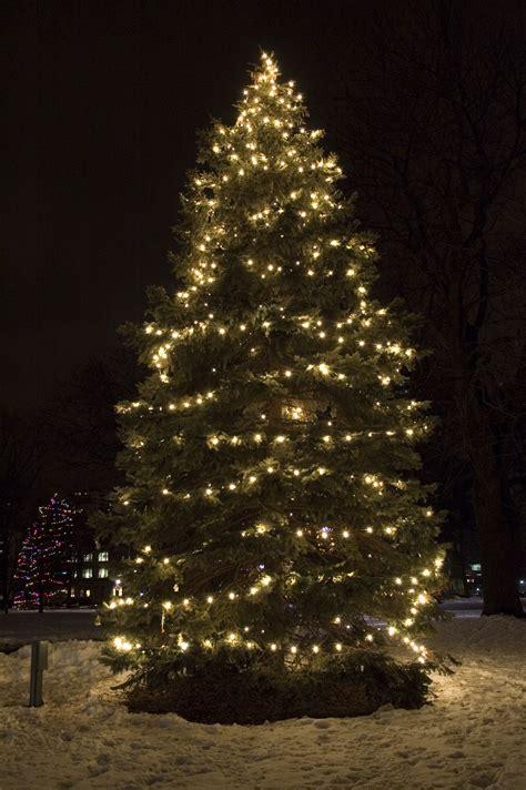 25ft  60ft Christmas Trees