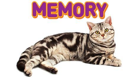 cat memory cats memory
