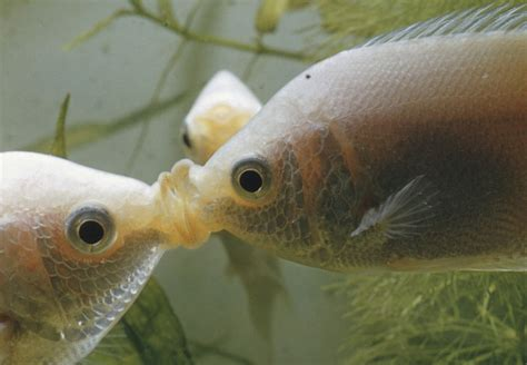 fish mouth types