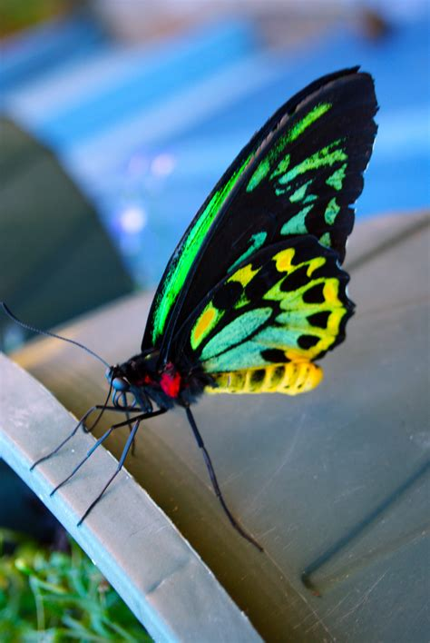stock photo  exotic butterfly freeimageslive