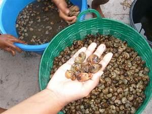Nüsse Welche Nüsse : blog archive cashew n sse eine delikatesse aus thailand ~ Cokemachineaccidents.com Haus und Dekorationen