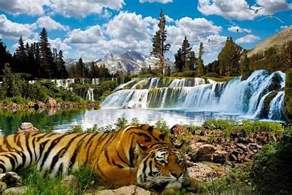 Wallpapers Popular Mobile Nature Ifreewallpaper 800 Screensavers