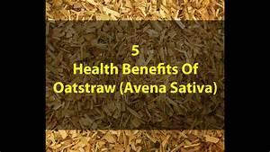 5 Health Benefits Of Oatstraw Avena Sativa