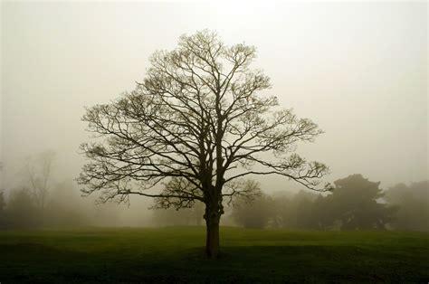 fog  stock photo public domain pictures