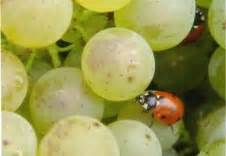 chambre d agriculture de haute corse viticulture le portail de l 39 agriculture biologique en