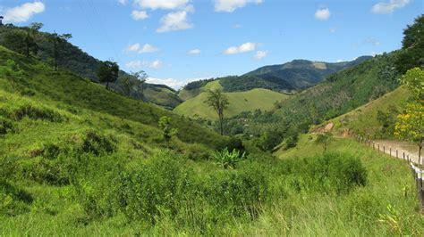 Rainforest Ecobank  Report From Mata Atlantica  Igive Trees
