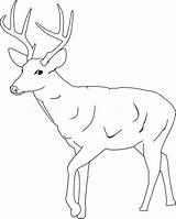 Mule Drawing Deer Drawings Coloring Getdrawings sketch template
