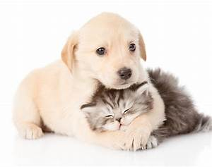 Pictures Of Dogs And Cats