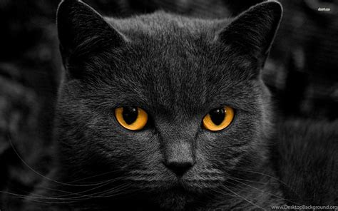 Cat Animal Wallpaper - black cat wallpapers animal wallpapers desktop background