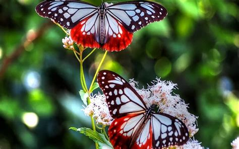 Butterfly Home Screen Wallpaper Images by Butterfly Wallpaper 65 Images