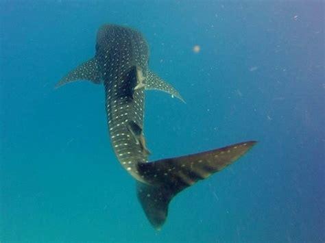 Just Add Water Boats Manta by Manta Scuba Cabo Dive Trip Reviews Photos Special Rates