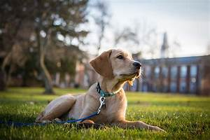the best of linus drews seeing eye dog in training With best dog training sites