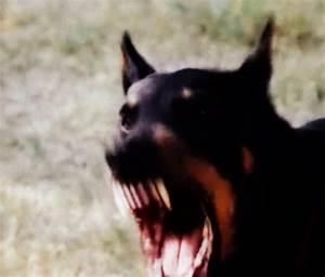 angry dog | Tumblr