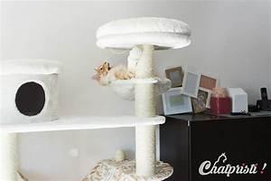 Arbre A Chat Solide : comment choisir un arbre chat chatpristi ~ Mglfilm.com Idées de Décoration
