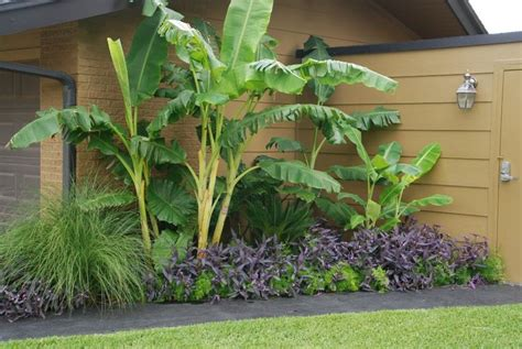 tropical garden bed 105 best images about garden tropical on pinterest banana plants tropical gardens and