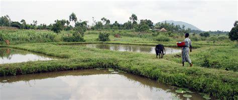 aqua shops farm africa