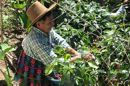 Coffee has helped fuel guatemala's economy for over a hundred years. Yalu Guatemala Coffee Plantation Tour » Keteka