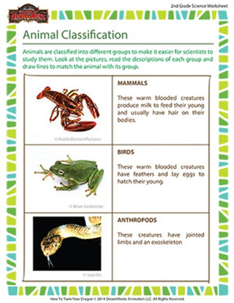 animal classification grade 2 kids science worksheets sod