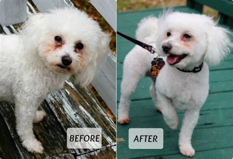 how much is a haircut at petsmart get your pet ready for magic with