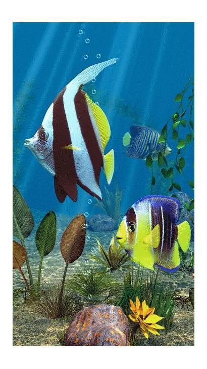 Fish Aquarium Animated Screensaver Moving Wallpapers Tropical