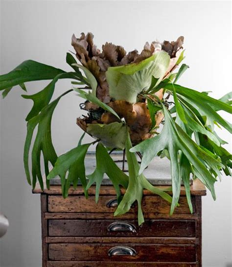 how to plant a staghorn fern in a hanging basket 20 fresh and natural decorations with staghorn fern home design and interior