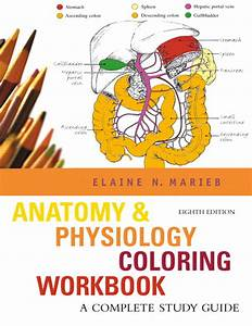 Marieb  Anatomy  U0026 Physiology Coloring Workbook  A Complete