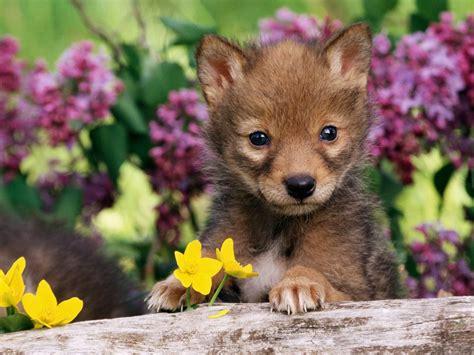 Baby Animal Wallpapers - baby animal desktop wallpaper www pixshark images