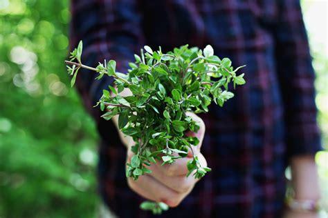Garten Pflanzen Essbar by 10 Essbare Wildpflanzen Die Schon Im Fr 252 Hjahr Ernten Kann