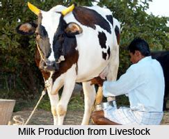 livestock  india animal husbandry  india