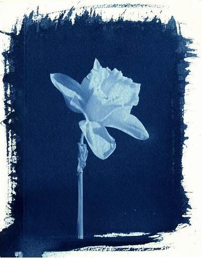Cyanotype Printing Process Prints Deviantart Herschel John