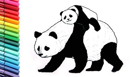 drawing  coloring panda learn  draw wild animals