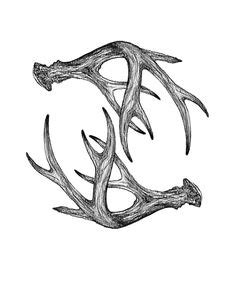Deer Skull Outline Tattoo Ideas Drawing