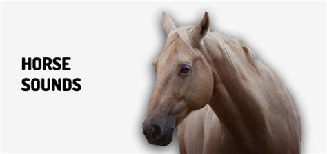 horse noise sound clips  orange  sounds