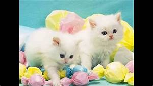 Really Cute Cats And Kittens White Youtube - Litle Pups