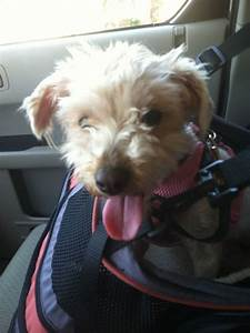 Zoe U0026 39 S Friends Animal Rescue