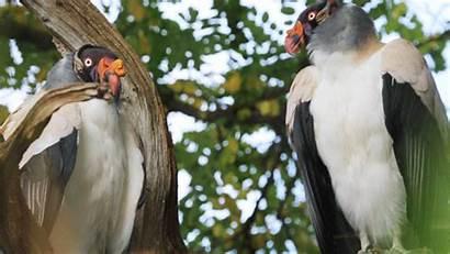 Zombie Animals Vultures Zoo Apocalypse Zsl