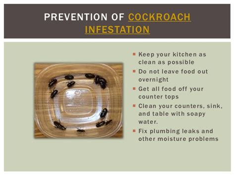 how to get rid of cockroaches in kitchen cabinets how to get rid of roaches in kitchen cupboards wow blog