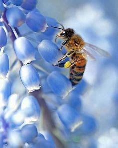 ameisen im bienenhaus die 707 besten bilder bienen in 2019 bienen schmetterlinge und bienenstock