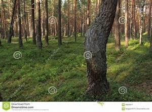 Comment Creuser Un Tronc D Arbre : la courbe d 39 un tronc d 39 arbre image stock image du feuillage r cr ation 99638811 ~ Melissatoandfro.com Idées de Décoration