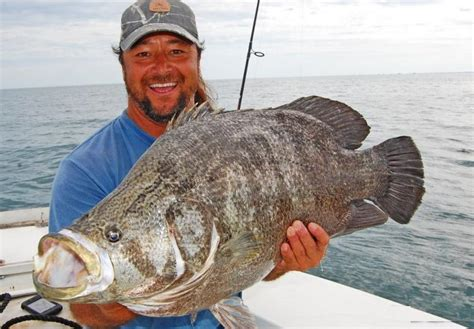 tripletail caught huge fish fishing record giant biggest largest surinamensis fishes sea redfish bull familyfishingtrips ocean pound venice outcast lum