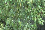 Unterschied Pflaumen Und Zwetschgen : video unterschied von gesch ftsf hrung und gesch ftsleitung ~ Frokenaadalensverden.com Haus und Dekorationen