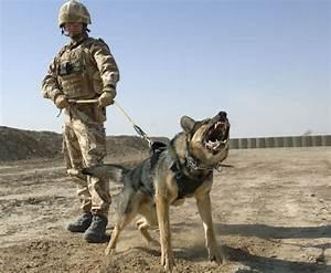 German Shepherd Police Dogs Video 15 Cool Hd Wallpaper ...