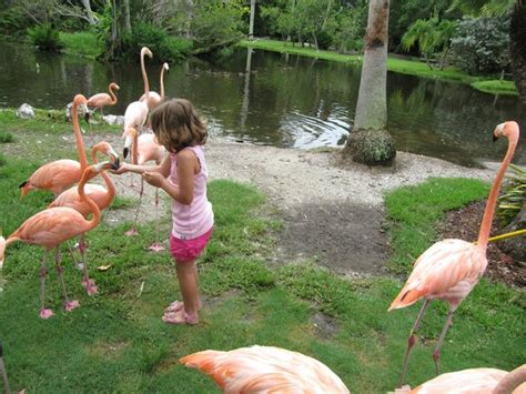 Jungle Gardens Sarasota by Guide To Sarasota For Families Travel Guide On Tripadvisor
