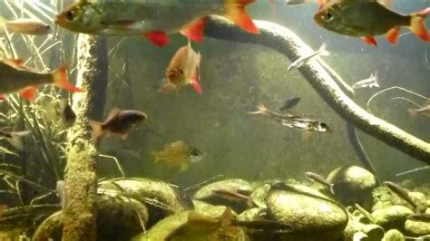poisson de riviere mts