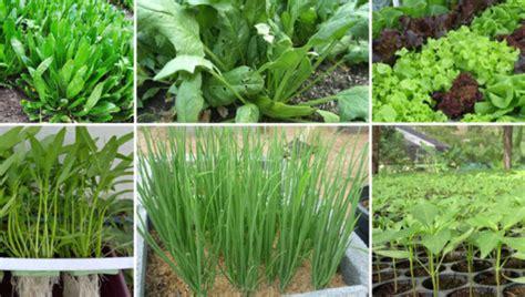 เทคนิคง่ายๆ ของการปลูกพืชผักสวนครัว ใว้รับประทานภายใน ...