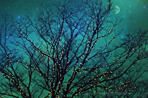 twinkle light tree items similar to nature photograph quot magical quot twinkle